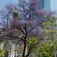 Frühling in Santiago