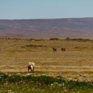 Pferde..
