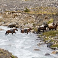 Patagonien wie man sichs vorstellt